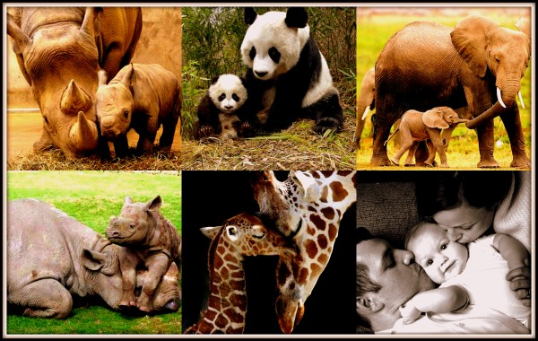 animals attachment collage